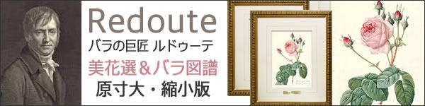 ルドゥーテ・美花選&バラ図譜 複製画